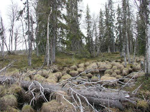Suomen Aarniometsät